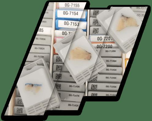 FFPE tissue slides