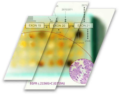 Molecularly Characterized Tissue Microarrays